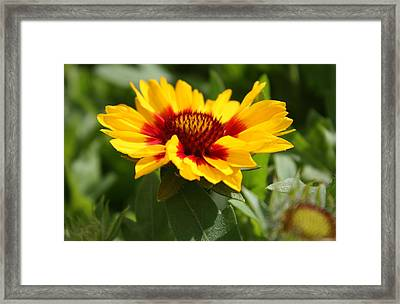 Framed Print featuring the photograph Signs Of Summer by Robin Regan