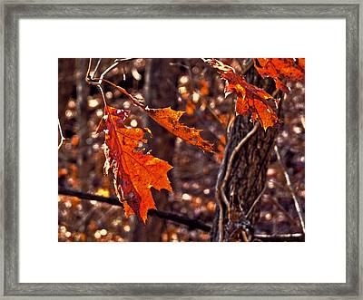 Framed Print featuring the photograph Silence Listening To Silence by William Fields