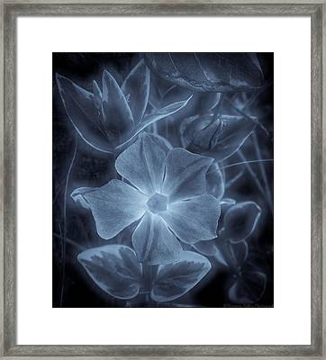 Silent Lucidity Framed Print by Victoria Ashley