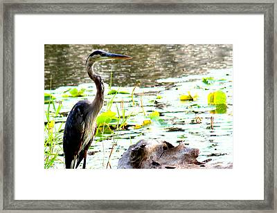Framed Print featuring the photograph Silent Solitude by Kathy  White