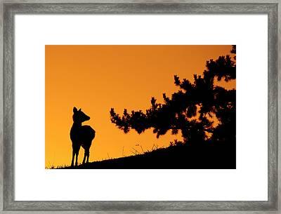Silhouette Deer Framed Print