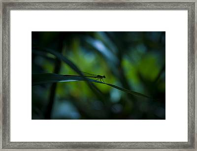 Silhouette Of A Damselfly Framed Print