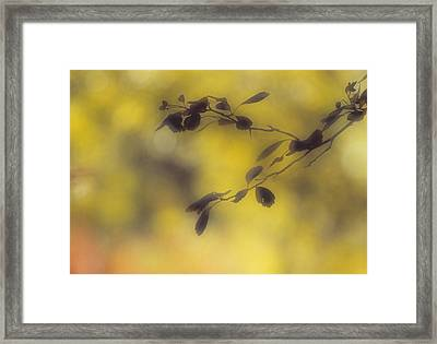 Silhouette Of Leaves, Cypress Hills Framed Print by Darwin Wiggett