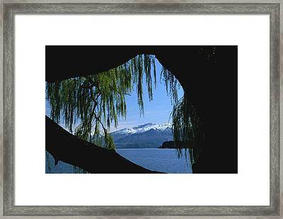 Silhouette Of Tree Along The Shores Framed Print by Todd Gipstein