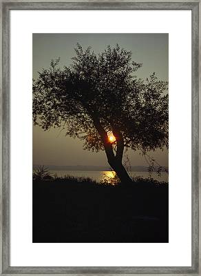 Silhouette Of Willow Tree At Sunset Framed Print by Al Petteway