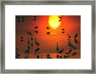 Silhouetted Wading Birds Feed Framed Print by George Grall