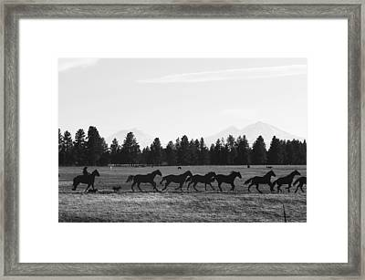 Silhouettes Framed Print by Angi Parks