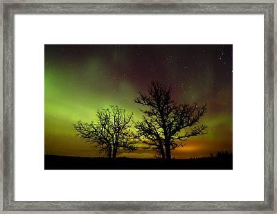 Silhouettes Of Bur Oak Trees Framed Print