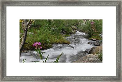 Framed Print featuring the photograph Silky Smooth by Johanne Peale