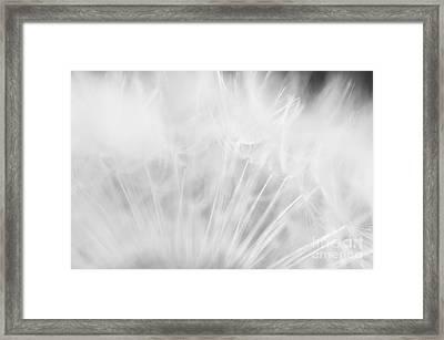 Silky Softness Framed Print