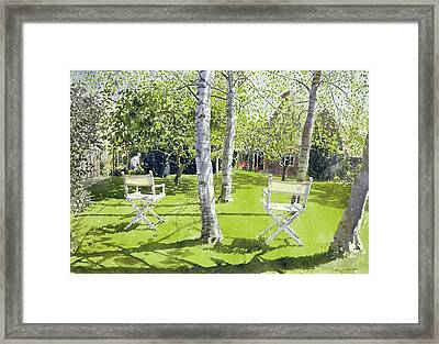 Silver Birches Framed Print