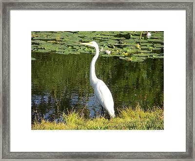 Silver Heron Framed Print by Sonali Gangane