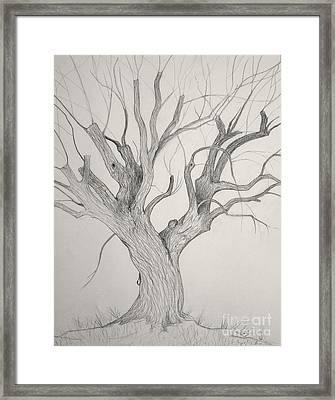 Silver Maple Framed Print