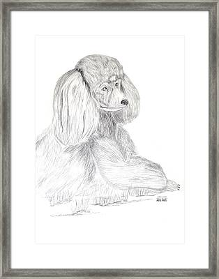 Silver Poodle Framed Print by Maria Urso