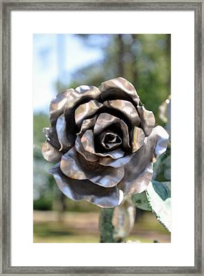 Framed Print featuring the photograph Silver Rose by Helen Haw