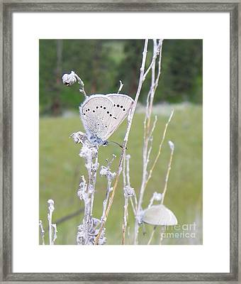 Silver Side Of Blue Framed Print
