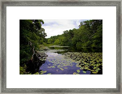 Silver Spring II Framed Print by Michael Friedman
