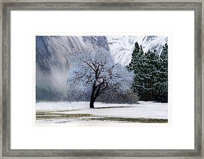 Silver Tree Framed Print by Robert Duvall