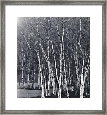 Silver Trees Framed Print