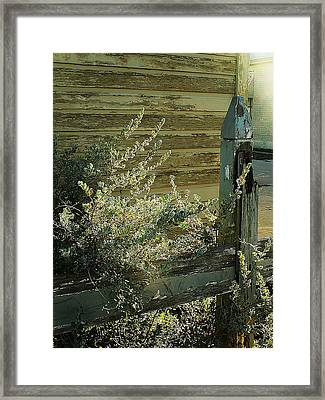 Framed Print featuring the photograph Silverleaf In Morning Sun by Louis Nugent