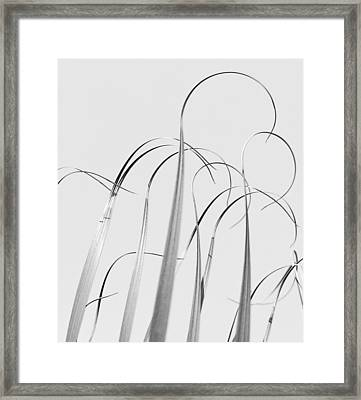Silvery Soaring Slivers Of Grass Framed Print