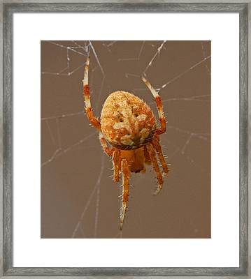 Simba The Spider Framed Print by Chet King