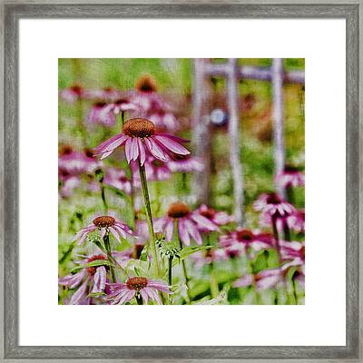 Simple Beauty Framed Print by Bonnie Bruno