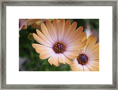Simple Beauty Framed Print by Michael Krahl