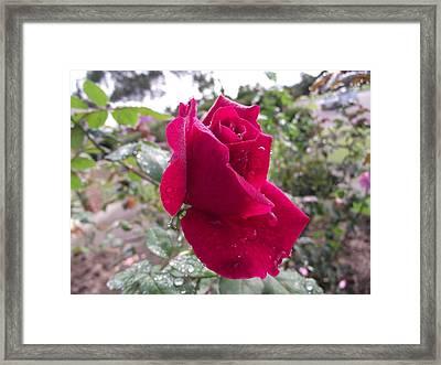 Simple Beauty Framed Print by Rani De Leeuw