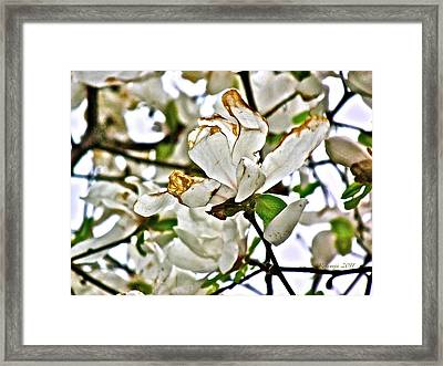 Simple Beauty Framed Print by Rotaunja