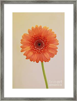 Simple Pleasures Framed Print by Inspired Nature Photography Fine Art Photography
