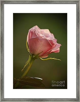 Simple Pleasures- Pink Rose Bud Framed Print by Inspired Nature Photography Fine Art Photography