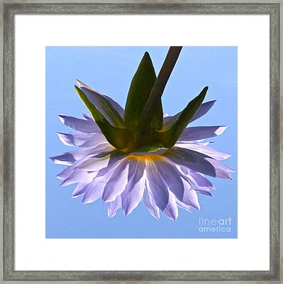 Simple Reflection Framed Print