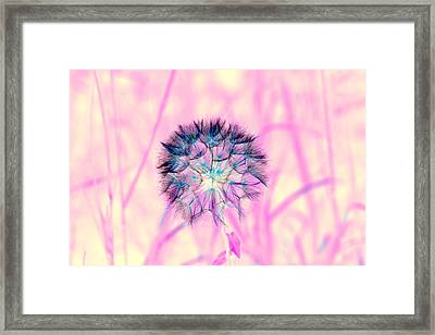 Simple Seeds Framed Print by Duke Brito