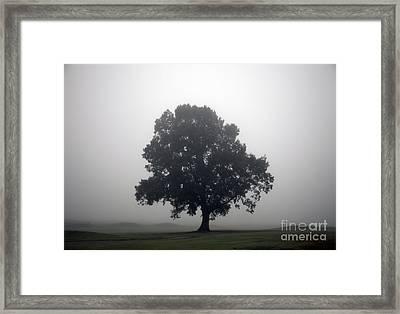 Simplicity Framed Print by Amanda Barcon