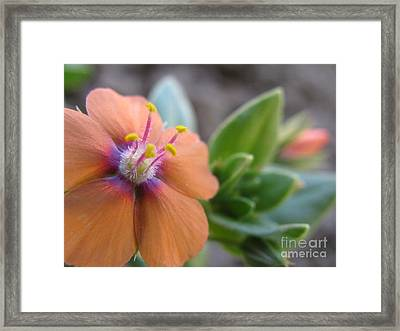 Framed Print featuring the photograph Simplistic Photography by Tina Marie