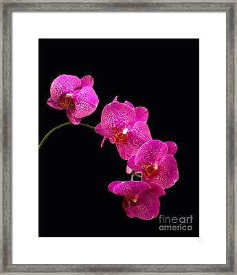 Framed Print featuring the pyrography Simply Beautiful Purple Orchids by Michael Waters