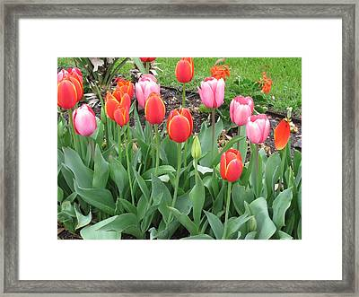 Simply Red And Pink Framed Print
