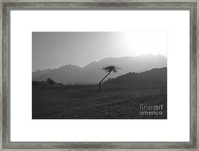 Sinai Desert Framed Print