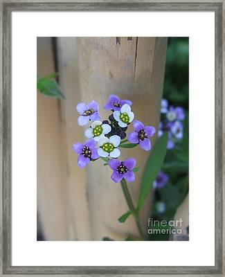 Framed Print featuring the photograph Sincere by Tina Marie