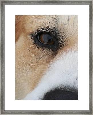 Sincerity Framed Print by Wide Awake Arts