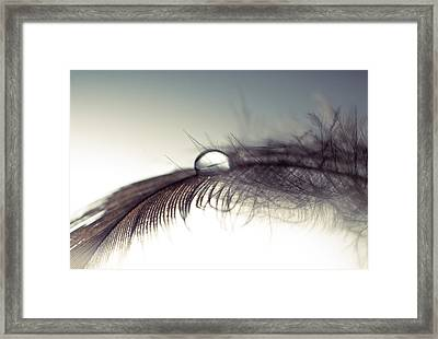 Sinergy Framed Print by Ivan Vukelic