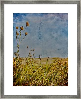 Singing In The Grass Framed Print by Empty Wall