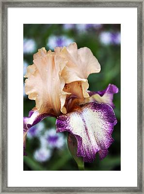 Singing In The Rain 2 Framed Print by Angelina Vick