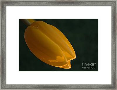 Framed Print featuring the photograph Single Again by Sherry Hallemeier