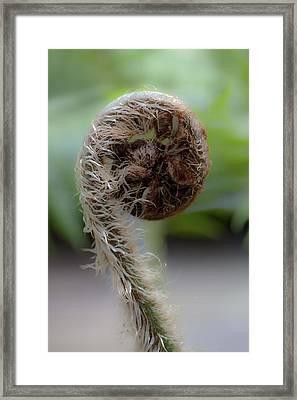 Framed Print featuring the photograph Single Frond by Carole Hinding