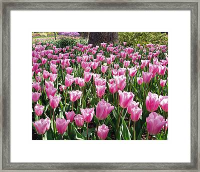 Framed Print featuring the photograph Single Late Cum Laude Field by Darleen Stry