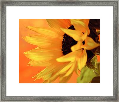Framed Print featuring the photograph Single Sunflower by James Bethanis