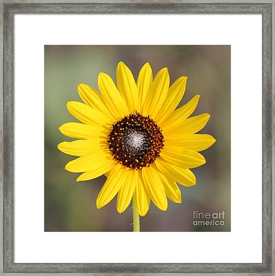Single Susan Squared Framed Print