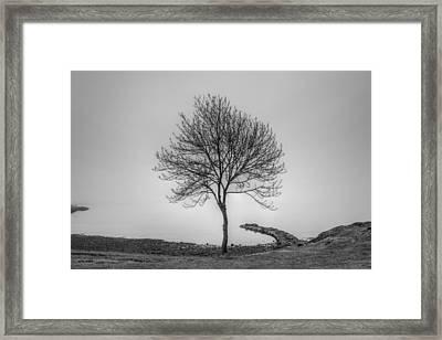 Single Tree By The Sea Framed Print by Sindre Ellingsen
